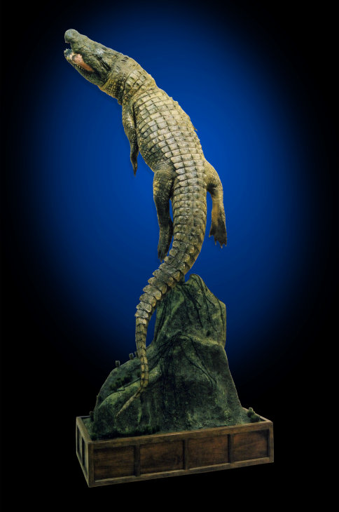 Alligators And Crocodiles Taxidermy Taxidermist In Maryland